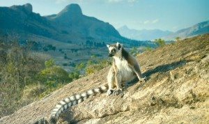 Island of Lemurs Madagascar & The Science of Rock 'n Roll Giveaway
